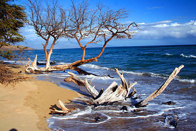 Driftwod Photograph - Beach Driftwood Fine Art Photography by James BO  Insogna