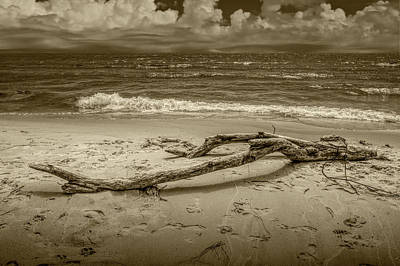 Photograph - Beach Driftwood In Sepia Tone On Lake Michigan by Randall Nyhof