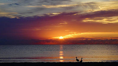 Photograph - Beach Ducks At Sunrise Delray Beach by Lawrence S Richardson Jr