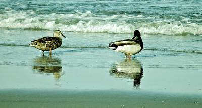 Photograph - Beach Ducks by John Wartman