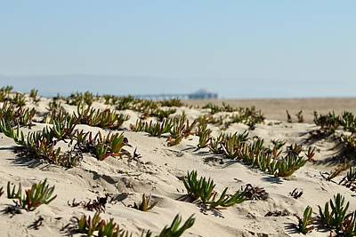 Photograph - Beach Dune by Brian Eberly