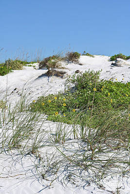 Photograph - Beach Dunes With Wildflowers And Beach Grass by Carol Groenen