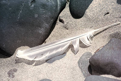 Photograph - Beach Feather by Bonnie Bruno