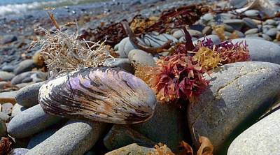 Photograph - Beach Find by Garvin Hunter