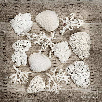 Still Life Royalty-Free and Rights-Managed Images - Beach finds by Elena Elisseeva