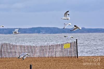 Rock Royalty - Beach fly by by Jeramey Lende