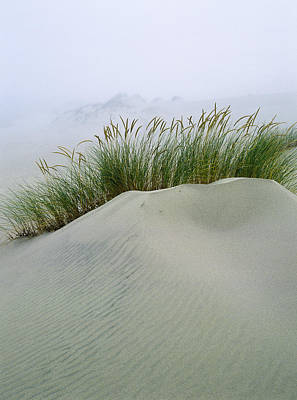 Photograph - Beach Grass And Dunes by Robert Potts