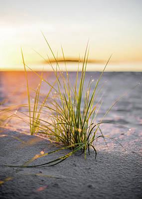 Photograph - Beach Grass by Brad Wenskoski