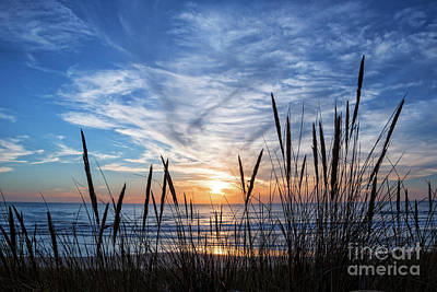 Art Print featuring the photograph Beach Grass by Delphimages Photo Creations