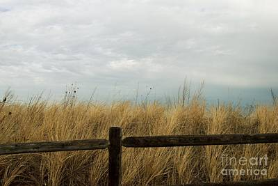 Photograph - Beach Grass by Eunice Miller