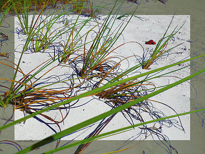 Photograph - Beach Grass by Ginny Schmidt