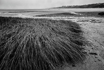 Photograph - Beach Grass by Jim Gillen