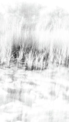Photograph - Beach Grass Narrow 1 by Alissa Beth Photography