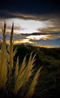 Beach Grass Art Print by Patrick  Flynn