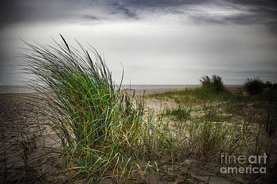 Beach Landscape Mixed Media - Beach Grass by Svetlana Sewell