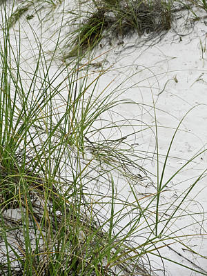 Photograph - Beach Grass by Tony Grider