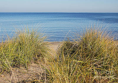 Photograph - Beach Grasses by Barbara McMahon