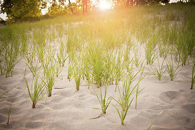 Indiana Photograph - Beach Grasses Number 3 by Steve Gadomski