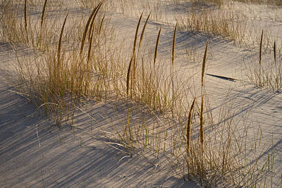 Beach Grasses Art Print