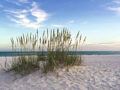 Photograph - Beach Grasses by Terri Matthias