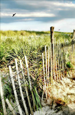 Photograph - Beach Haven Dunes by Diana Angstadt