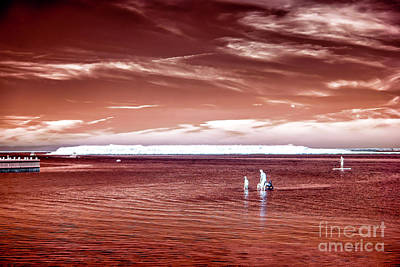 Photograph - Beach Haven Red Infrared by John Rizzuto