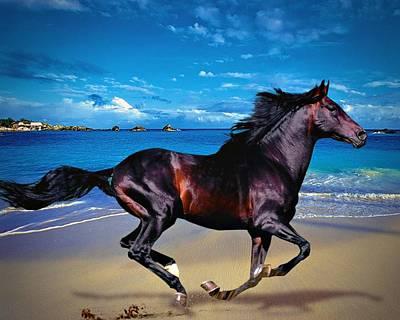 Beach Horse Art Print by Robert Smith