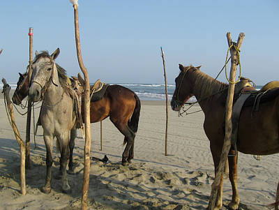 Photograph - Beach Horses by Tatiana Travelways