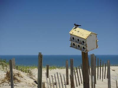 Photograph - Beach House Of An Avian Variety by Matt Taylor