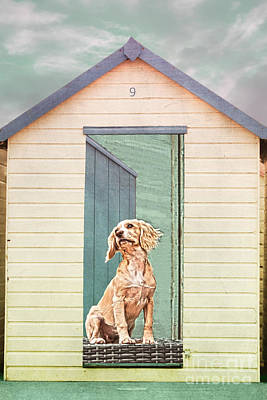 Photograph - Beach Hut Puppy by Terri Waters