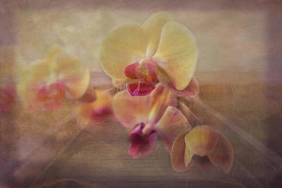 Photograph - Beach Island Orchids by Debra and Dave Vanderlaan