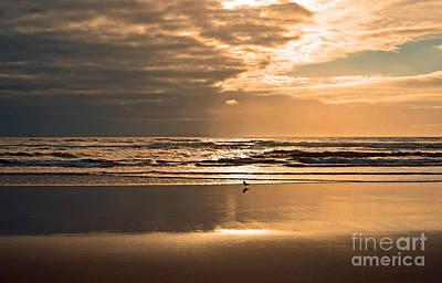 Photograph - Beach Loaner by Frank Larkin