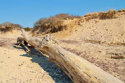 Photograph - Beach Log by Karen Silvestri