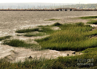 Photograph - Beach Marshes by Janice Drew