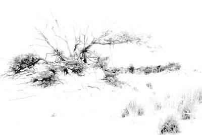 Beach Morning Lone Tree On Dune Art Print by Randy Steele