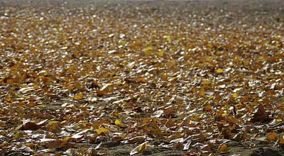 Beach Of Autumn Leaves Art Print