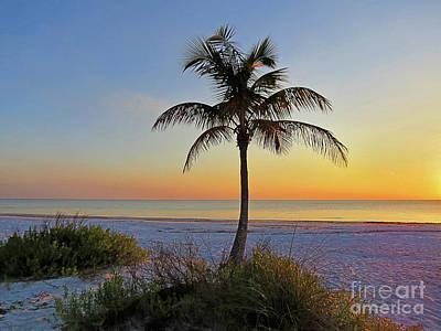 Island .oasis Photograph - Beach Palm by Chris Andruskiewicz