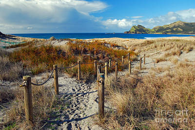 Photograph - Beach Path 2 by Karen Lewis