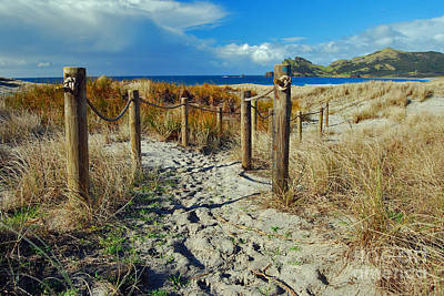 Photograph - Beach Path by Karen Lewis