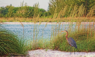 Photograph - Beach Patrol by HH Photography of Florida