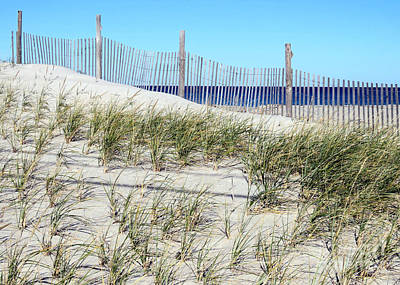 Photograph - Beach Plantings by Janice Drew