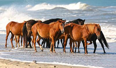 Beach Ponies Art Print by Robert Och