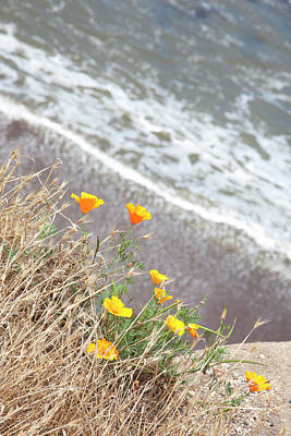 Photograph - Beach Poppies by John Noel