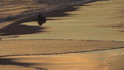 Photograph - Beach Remains by Carla Parris