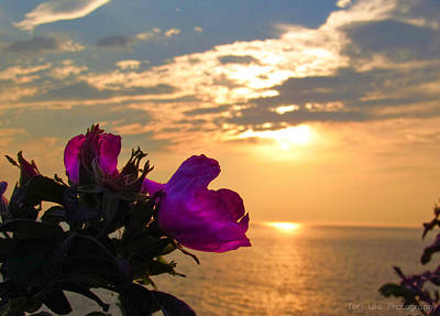 Photograph - Beach Roses by Teri Ridlon
