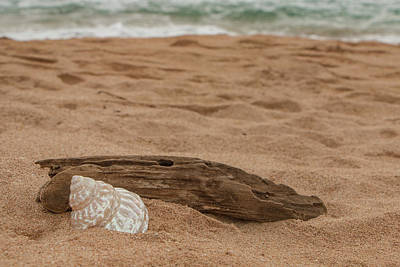 Photograph - Beach, Sand, And Shell by Teresa Wilson