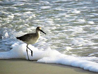Photograph - Beach Sandpiper by Kathy Long