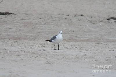 Photograph - Beach Seagull Taking In The View by John Telfer