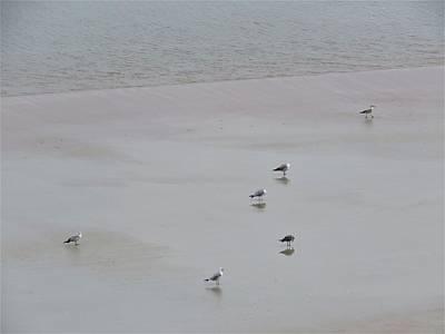 Photograph - Beach Seagulls by Kathy Long