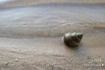 Photograph - Beach Shell by Erick Schmidt